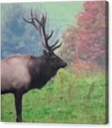 Mr Elk Enjoying The Autumn Canvas Print