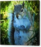 Mr. Squirrel Canvas Print