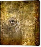 Mrs Pheasant Canvas Print