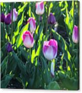 Msu Spring 3 Canvas Print