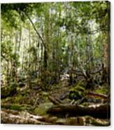 Mt Field Forest Canvas Print