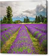 Mt. Hood And Lavender Canvas Print