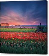 Mt. Hood And Tulip Field At Dawn Canvas Print