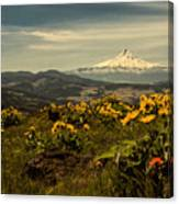 Mt. Hood And Wildflowers Canvas Print