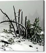 Mt Hood Snow Canvas Print