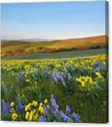 Mt. Hood Wildflower Morning Canvas Print