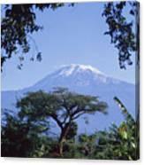 Mt. Kilimanjaro,moshi,tanzania Canvas Print