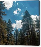 Mt. Pinos Canvas Print