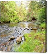 Mud Run, Pennsylvania, Pocono Mountain Stream Canvas Print
