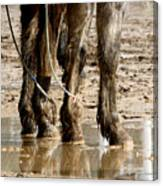 Muddy Reflections.. Canvas Print