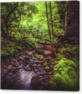Muir Woods No. 3 Canvas Print