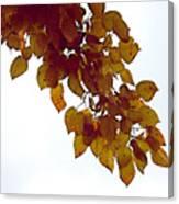 Mulberry Autumn Canvas Print
