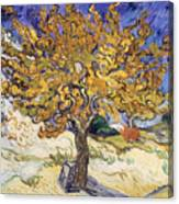 Mulberry Tree Canvas Print