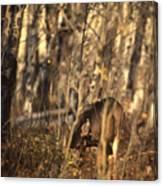 Mule Deer In Aspen Thicket Canvas Print