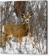 Mule Deer Portrait In Heavy Snow Canvas Print
