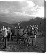Mule Drawn Wagon Canvas Print