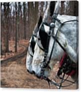 Mules At Sugar Camp Canvas Print