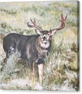 Muley Canvas Print