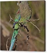 Mulga Parrot Female Canvas Print