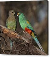 Mulga Parrot Pair Canvas Print