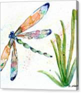 Multi-colored Dragonfly Canvas Print
