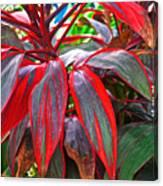 Multi Colored Leaves In Botanical Garden Of Rio De Janeiro Brazil Canvas Print