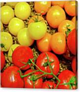 Multi Colored Tomatoes Canvas Print