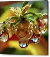 Multicolored Drops Canvas Print
