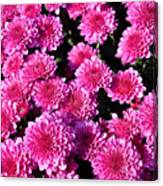 Mums The Word Canvas Print