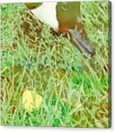 Munching On Green Grass Canvas Print