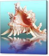 Murex Seashell Reflection Canvas Print