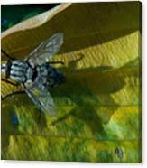 Musca On Display Canvas Print