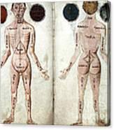 Muscle Man, Brains Ventricles, 15th Canvas Print