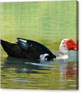 Muscovy Red Canvas Print