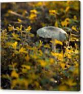 Mushroom 1 Canvas Print