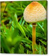 Mushroom And Grass Canvas Print
