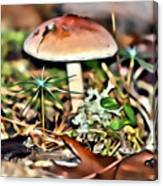 Mushroom And Moss Canvas Print