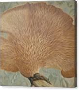 Mushroom  And Seeds Canvas Print