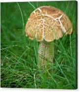 Mushroom In The Grass Canvas Print