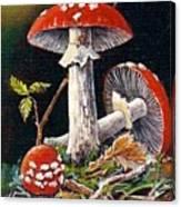 Mushroom Magic Canvas Print