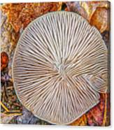 Mushroom On Fall Floor Canvas Print