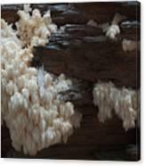 Mushroom On Idaho Log Canvas Print