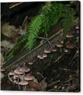 Mushroom Row Canvas Print