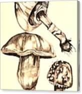 Mushroom Study 4 Canvas Print