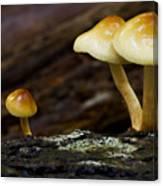 Mushroom Trio Canvas Print