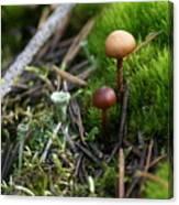 Mushroom Tundra Canvas Print