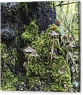 Mushroom Colony Canvas Print
