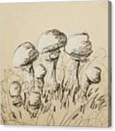 Mushrooms On Toned Paper With Charcoal Canvas Print