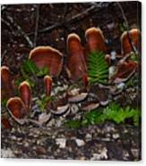 Mushrooms,log And Ferns Canvas Print