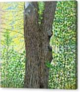 Muskoka Maple Canvas Print